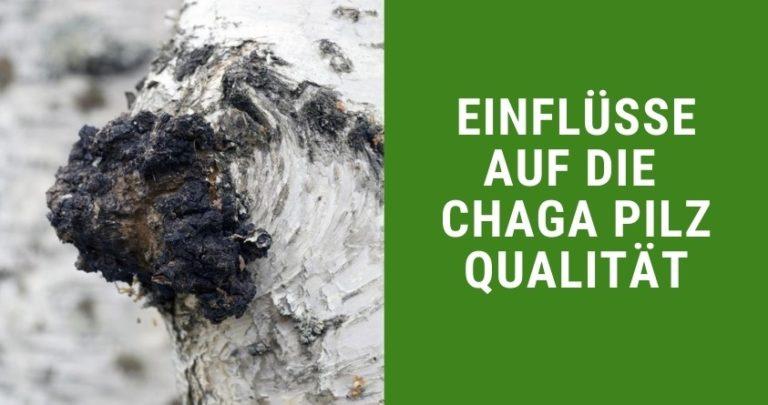 Einflüsse auf die Chaga Pilz Qualität
