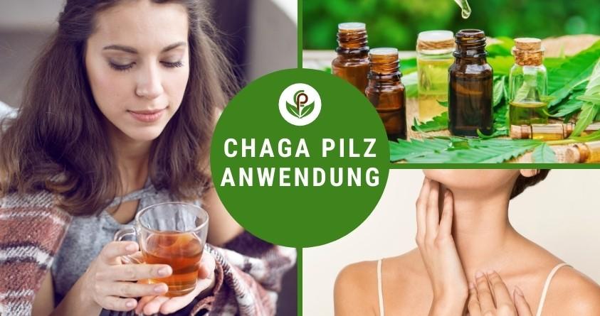 Chaga Tee Anwendung